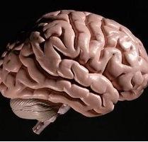血检能确诊脑瘤吗?