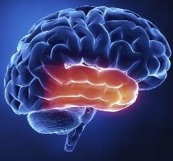 手机放身旁睡觉易致脑肿瘤