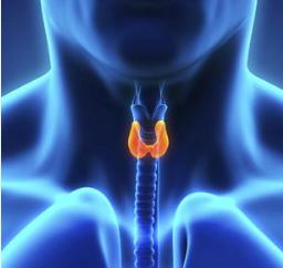食道癌可以采用中医疗法