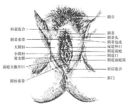 人体大脑解剖生理学
