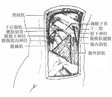 腰抵骨结构图