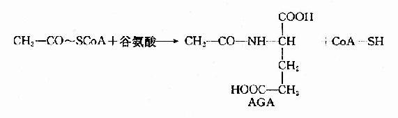肝细胞线粒体中谷氨酸脱氢酶和氨基甲酰磷酸合成酶i催化的