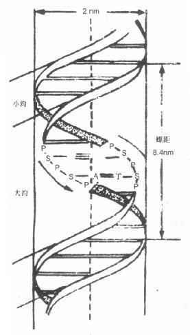 节 核酸的分子结构
