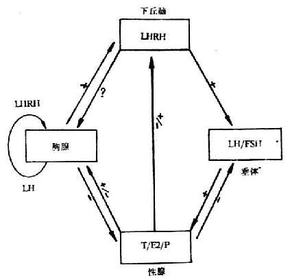 网络环路接线图