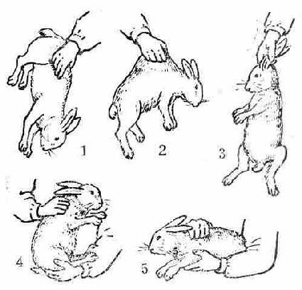 简易兔子头画法步骤