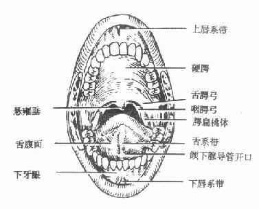 下颌第一前磨牙解剖形态结构图