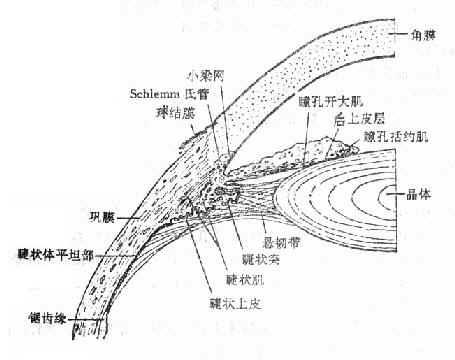 眼球解剖手绘图
