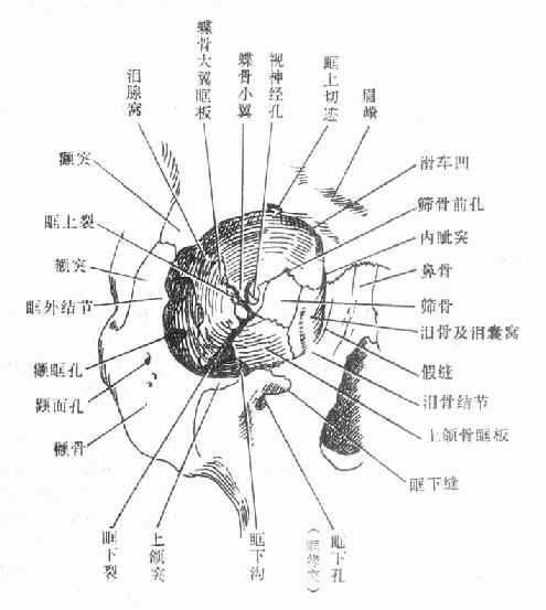 椭圆类型管解剖示意图