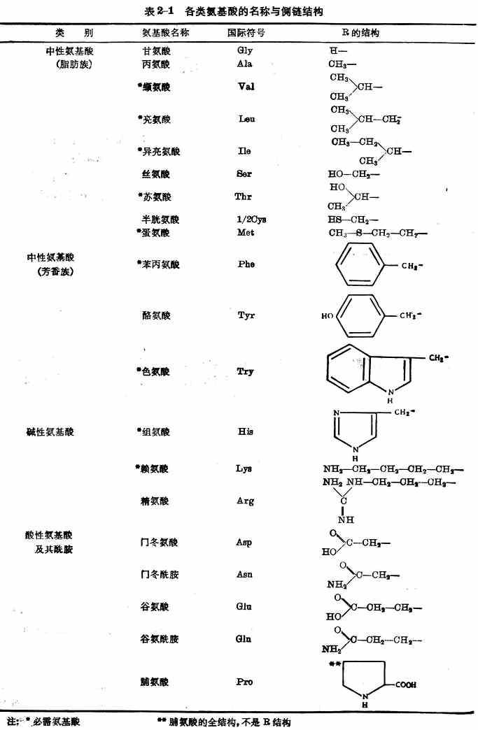 氨基酸的结构图