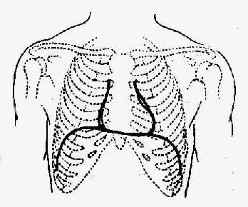 心脏结构简图手绘