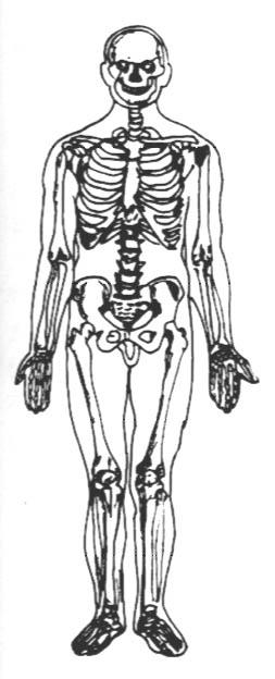 胸部解剖手绘图