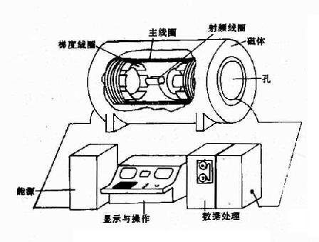 脉冲停止发射后,人体氢原子核变成一个短波发射台,而mr信号接受器则